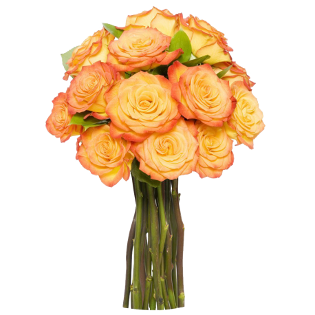 12 long stem orange roses without vase 12 long stem orange roses without vase mightylinksfo