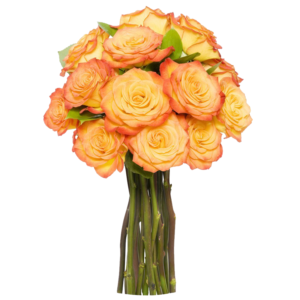 12 long stem orange roses without vase reviewsmspy